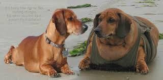 Resultado de imagen para fotosa de perros obesos