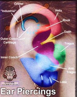 Think the conch would  cute ear piercing names tragus piercings guide also pain chart cartilage pinterest rh