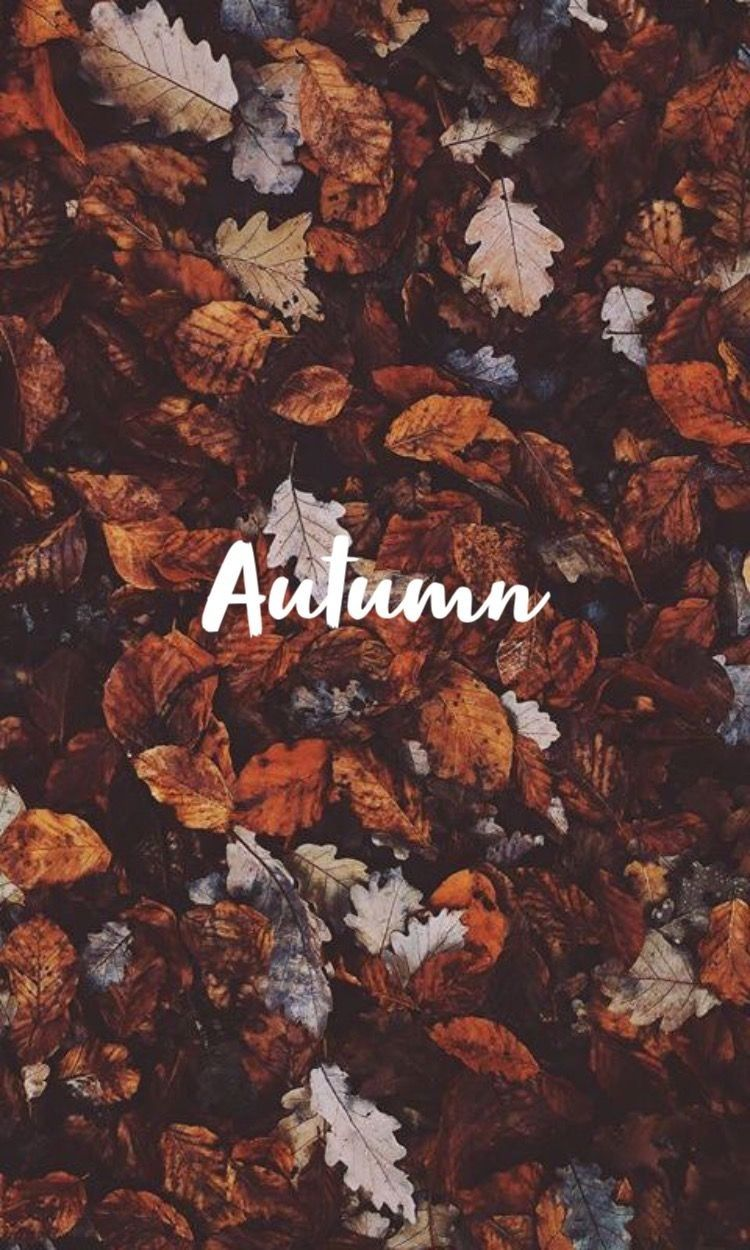 Uploaded By Gabby Black Find Images And Videos About Love Autumn And Background On We Heart It Autumn Leaves Wallpaper Cute Fall Wallpaper November Wallpaper