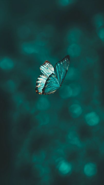 The latest iPhone11, iPhone11 Pro, iPhone 11 Pro Max mobile phone HD wallpapers free download, butterfly, wings, pattern, flight, focus - Free Wallpaper   Download Free Wallpapers