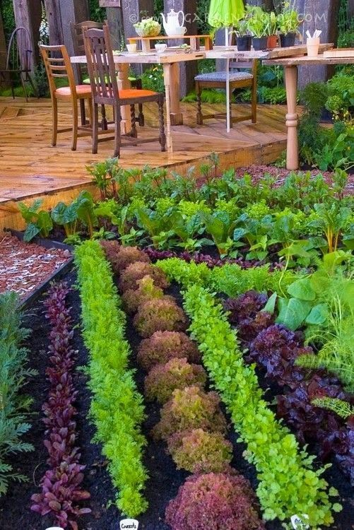 Deck Vegetable Garden Ideas Part - 29: Veggie Landscaping - Beautiful Vegetable Garden U0026 Backyard Deck And Patio  Furniture, Rows Of Colored Lettuces, Chard, Carrots, And Other Edible Food  Garden ...