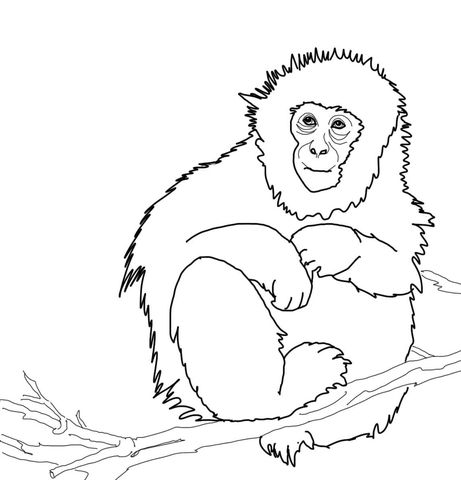 Japanese Macaque Or Snow Monkey Coloring Page From Macaque