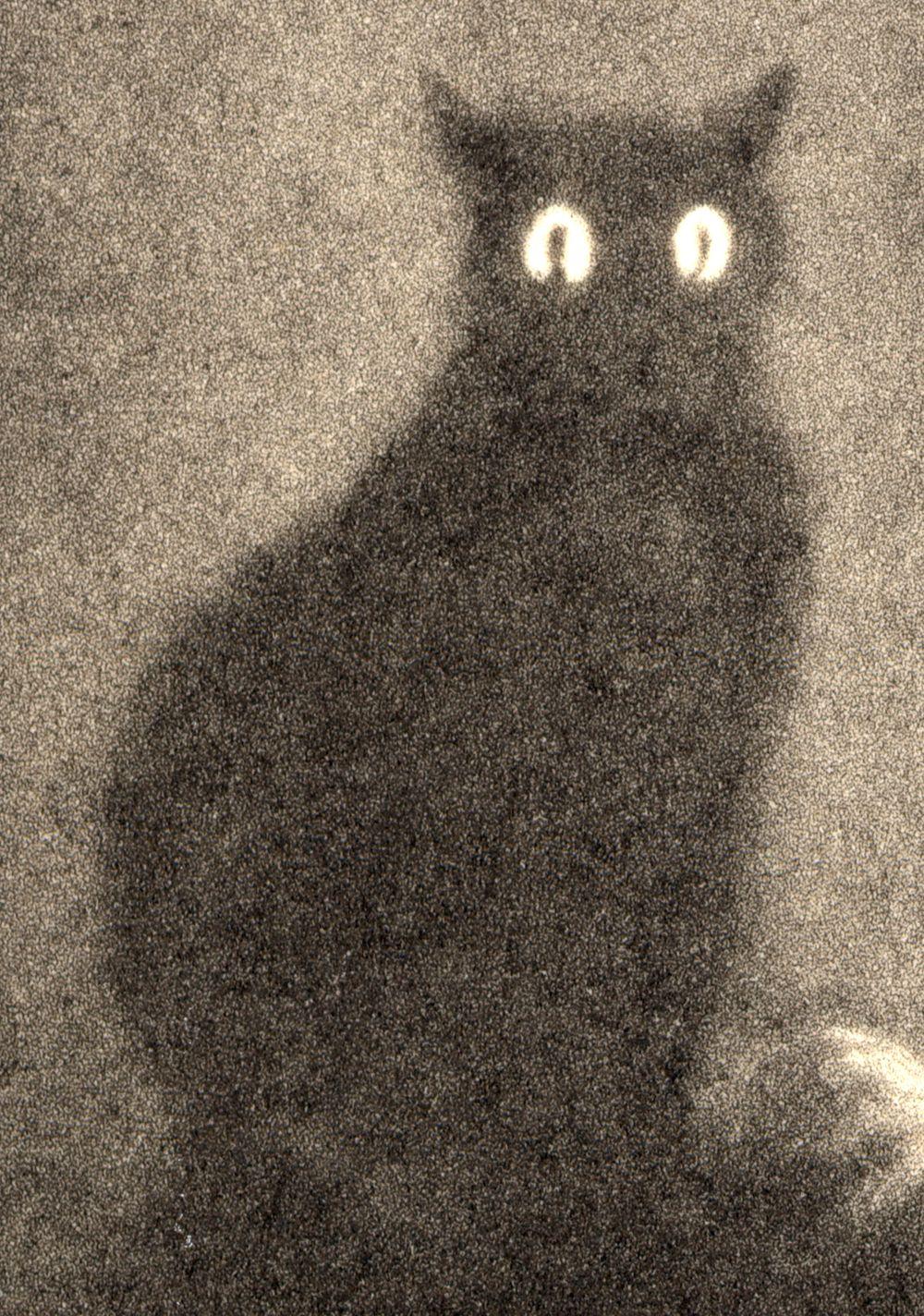 Shadow cat Black cat art, Cat art, Black cat