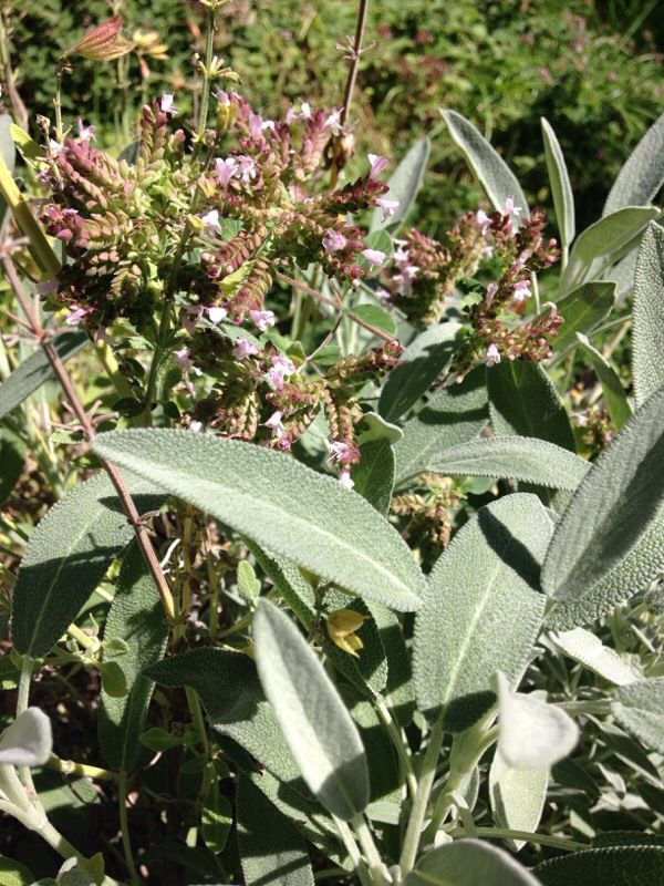 Free Plant Identification Plant identification, Plants