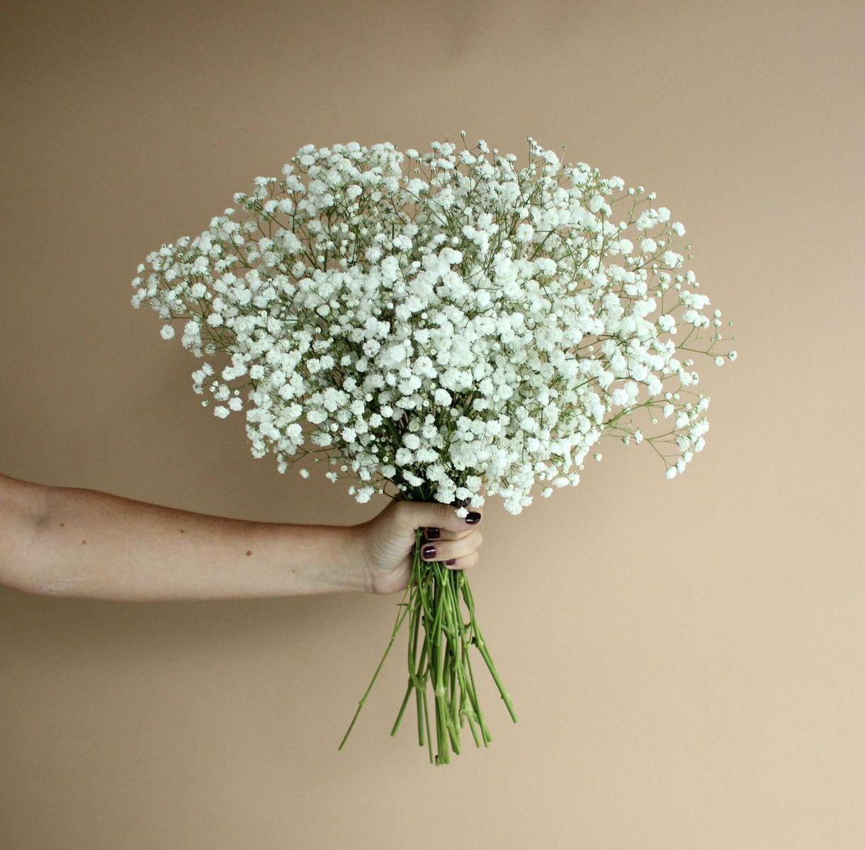 Baby S Breath Flowerdefault Title Fresh Wedding Flowers Babys Breath Flowers Wedding Flower Arrangements