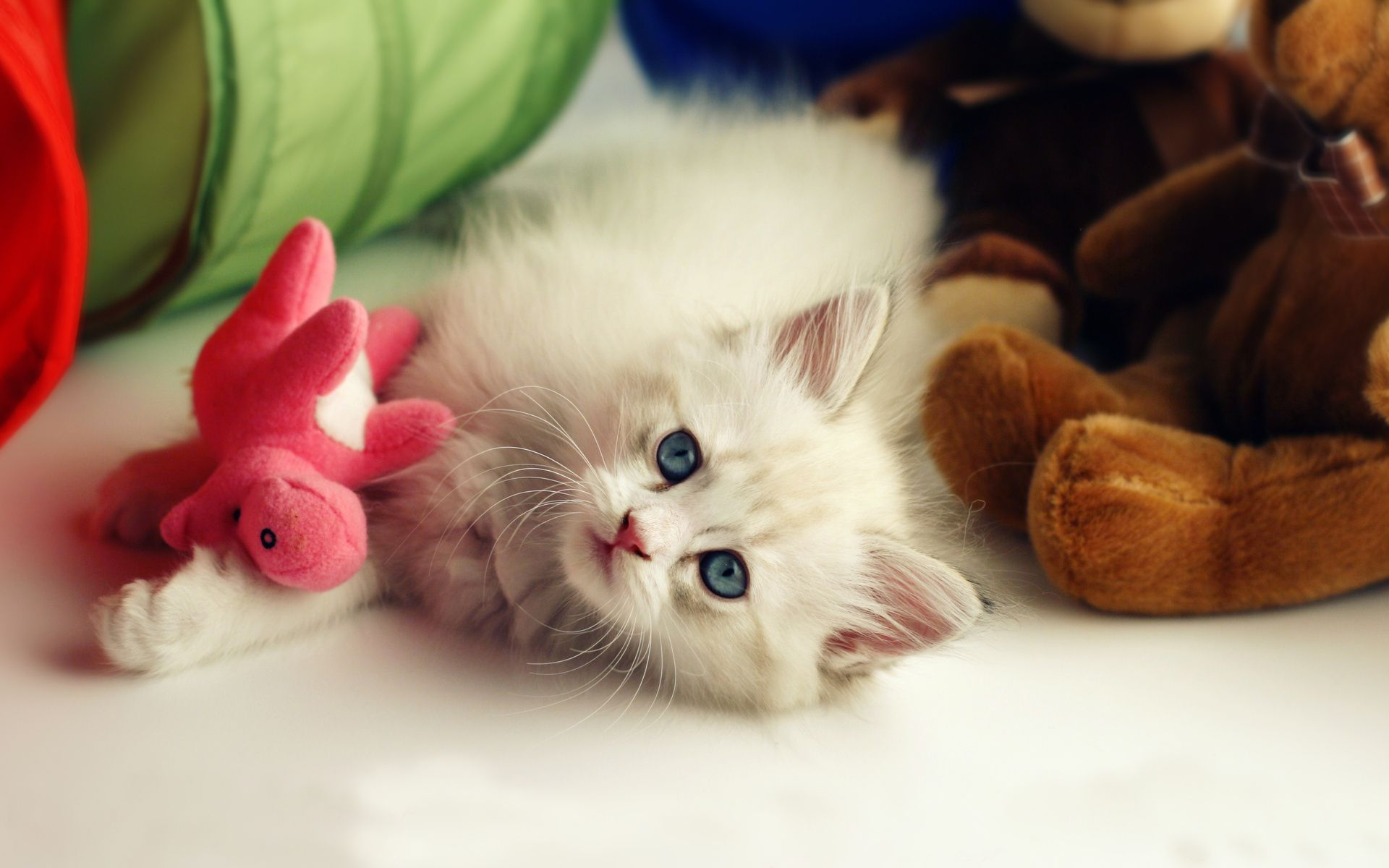Cat Kitten And Toys Wallpapers