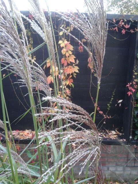 Herfst in de vlammende grassenborder
