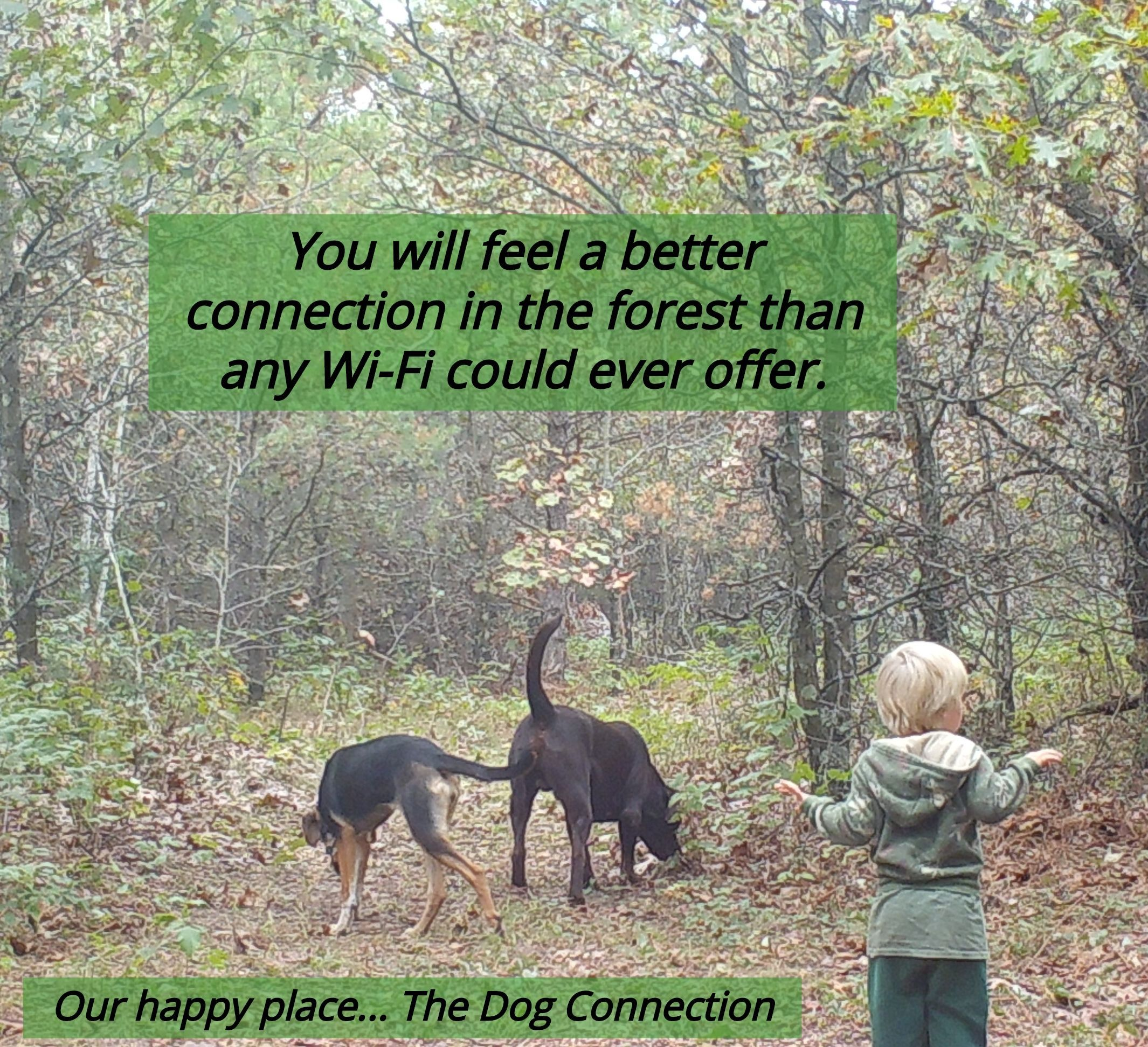 Take Time To Walk In The Woods With Your Dogs Barefoot Is Even Better Dogs Grounding Doglover Labrador Dog Blog Dog Quotes Dog Lovers