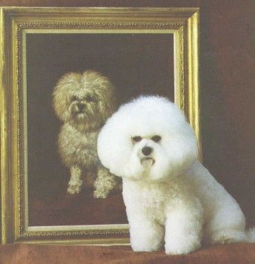 The Bichon Frise In Art Gallery 7 Page 1 Bichon Frise Bichon Frise Dogs Bichon
