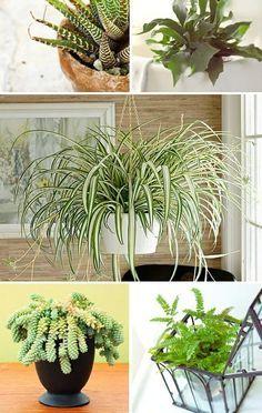 Welche Zimmerpflanzen brauchen wenig Licht? | Pflanzen ...