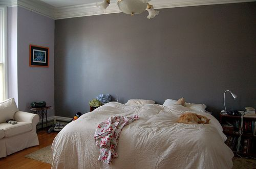 Gray Bedroom With Accent Wall The Ultimate Designs Night Other