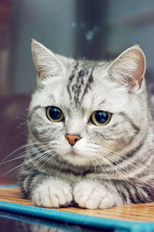 税后五百万翻番 おしゃれまとめの人気アイデア Pinterest Madhu 子猫 可愛い猫 キュートな猫