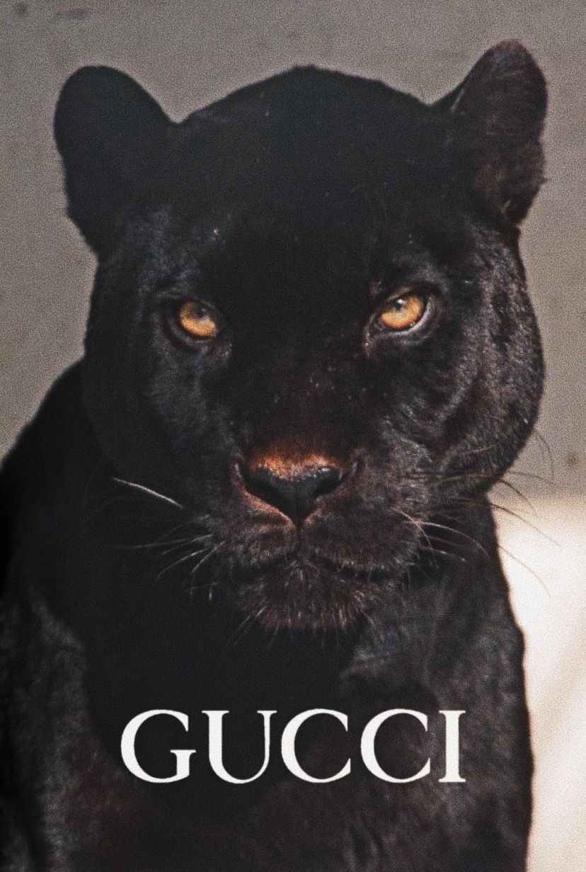 Pin By Sevde Simsek On Aesthetic Animals Cute Animals Animals Beautiful Gucci black panther wallpaper