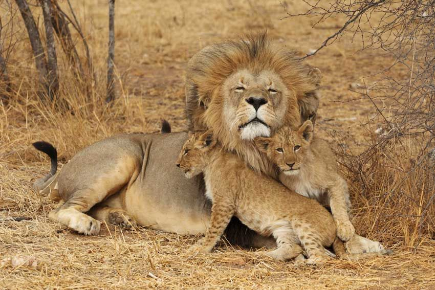 8Days Wildlife & Cultural Excursions From ifude Tours