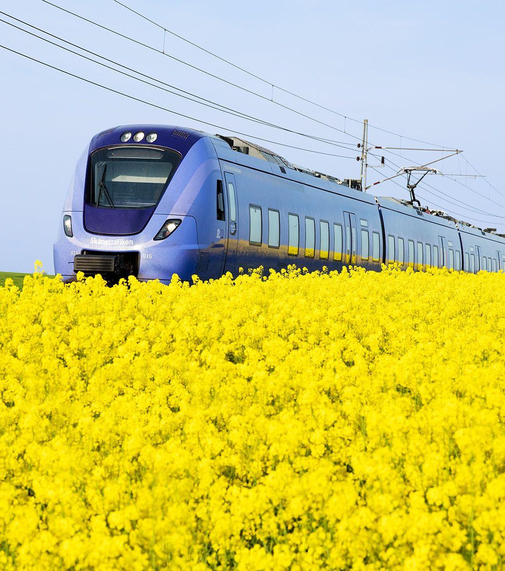 Train (Skånetrafiken, pågatåg) and rapeseed field in Österlen, Southern Sweden.
