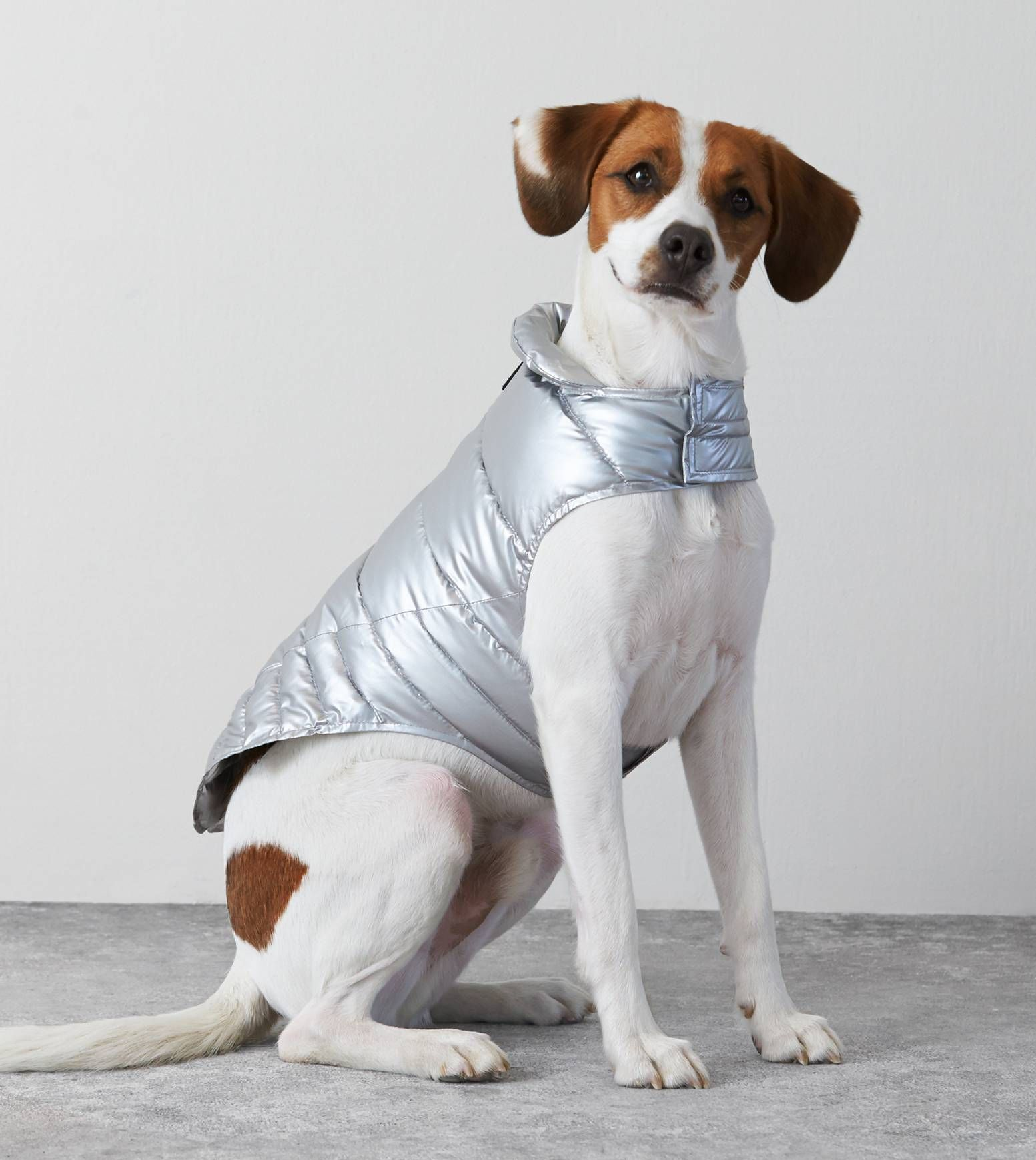 Top Last Minute Gifts For The Holidays American Beagle Crazy