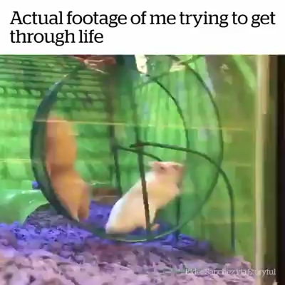 Actual Footage Of Me Trying To Get Through Life