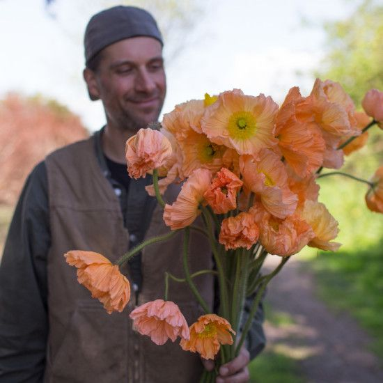 Floret_Iceland Poppies_Sherbet Mix-4