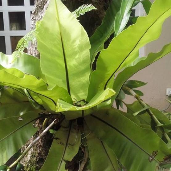 Visit Candice S Lovely Sri Lanka Garden Finegardening Fine Gardening Pretty Green Lovely