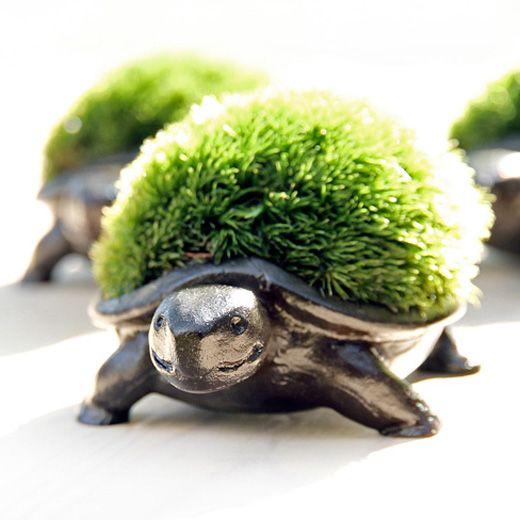 ペット寸前 殺人的な可愛さを放つ亀の苔盆栽 インテリアスパイス 盆栽 こけ庭 苔