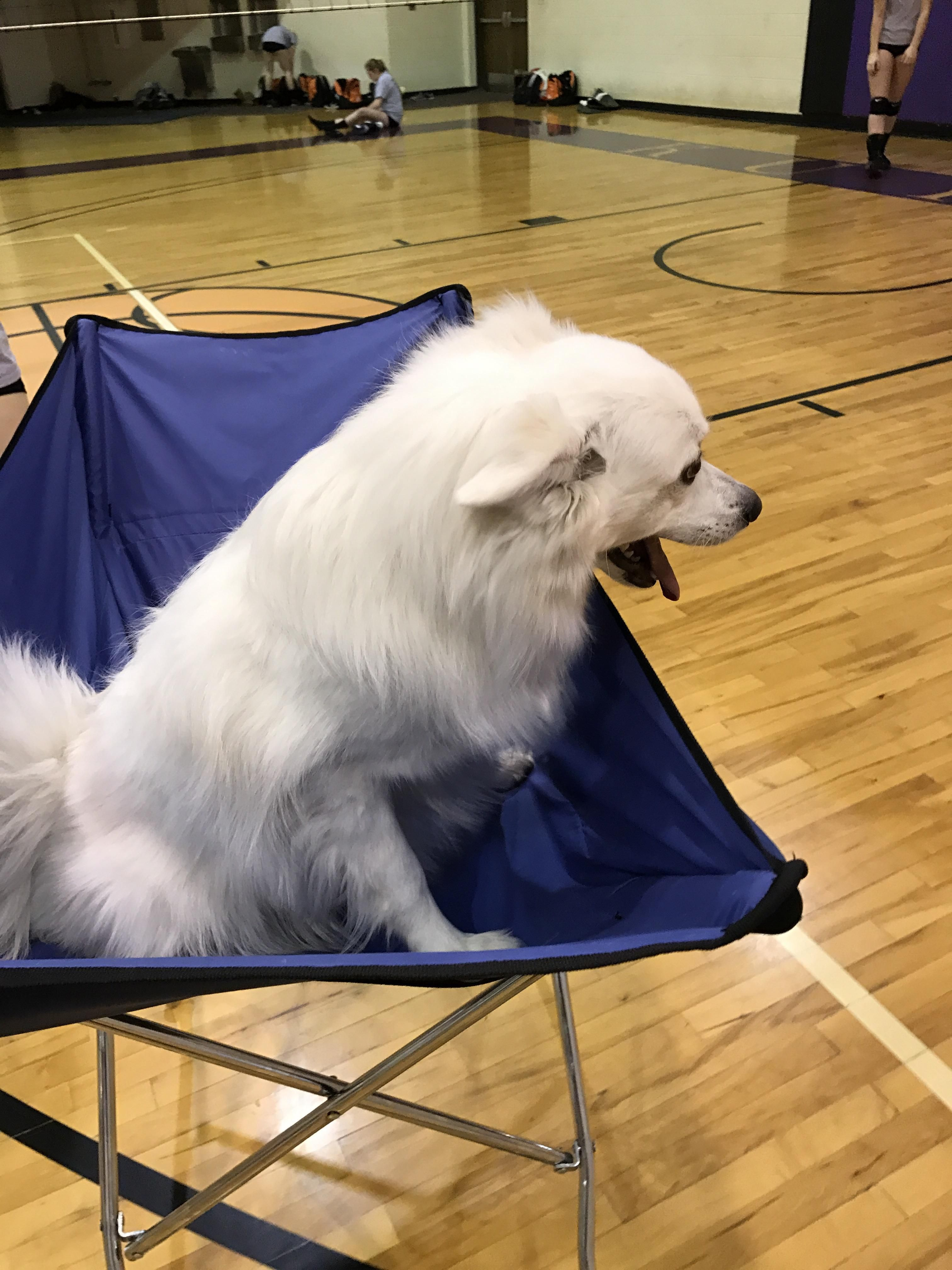 I M A Volleyball Coach I Took My Dog To Practice Today And Put Him In The Ball Cart Cute Animal Pictures Baby Dogs Dog Pictures