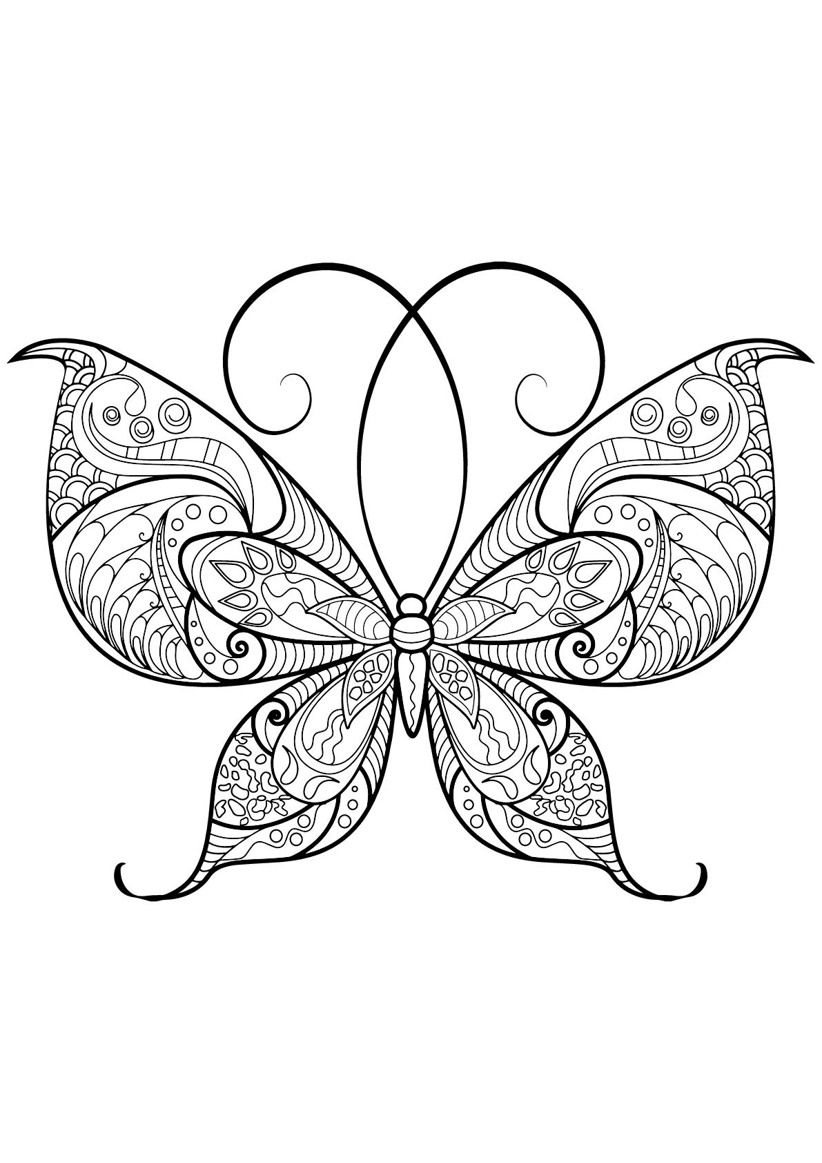 Butterfly beautiful patterns 13 - Butterflies & insects Adult ...