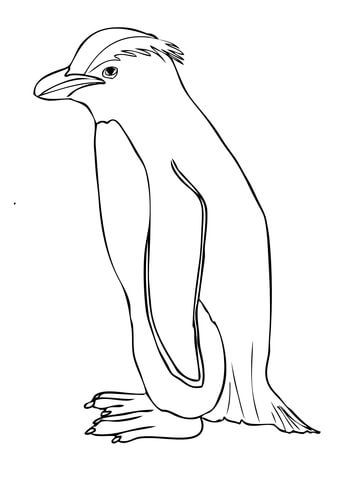 Pingino de Fiordland o tawaki Dibujo para colorear  animales