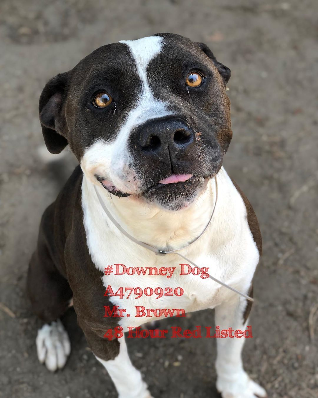Shelter Dogs 4 Life On Instagram 48 Hour Red Listed