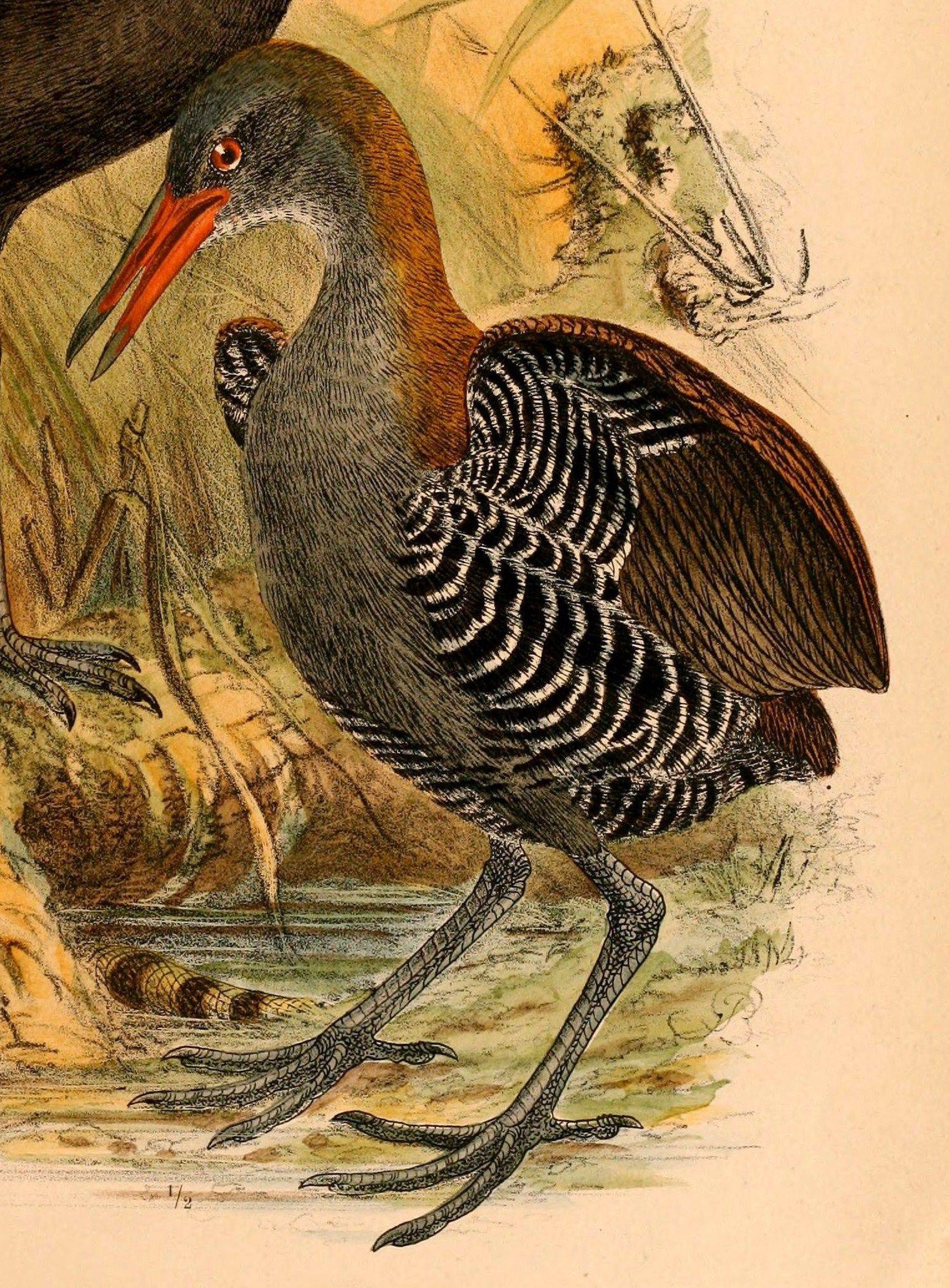 Пин на доске Aves Nonpasserines