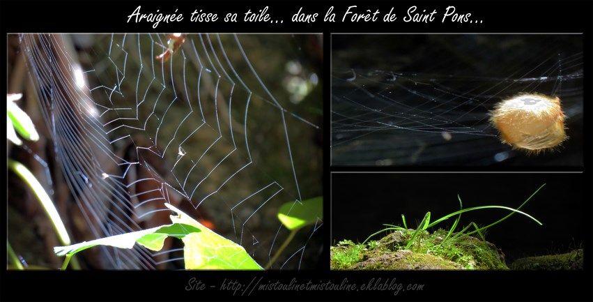 Gémenos - Forêt de Saint Pons http://mistoulinetmistouline.eklablog.com/ http://www.my-art.com/isabelle-escapade/collections/provence https://www.facebook.com/pages/Mistoulin-et-Mistouline-en-Provence/384825751531072