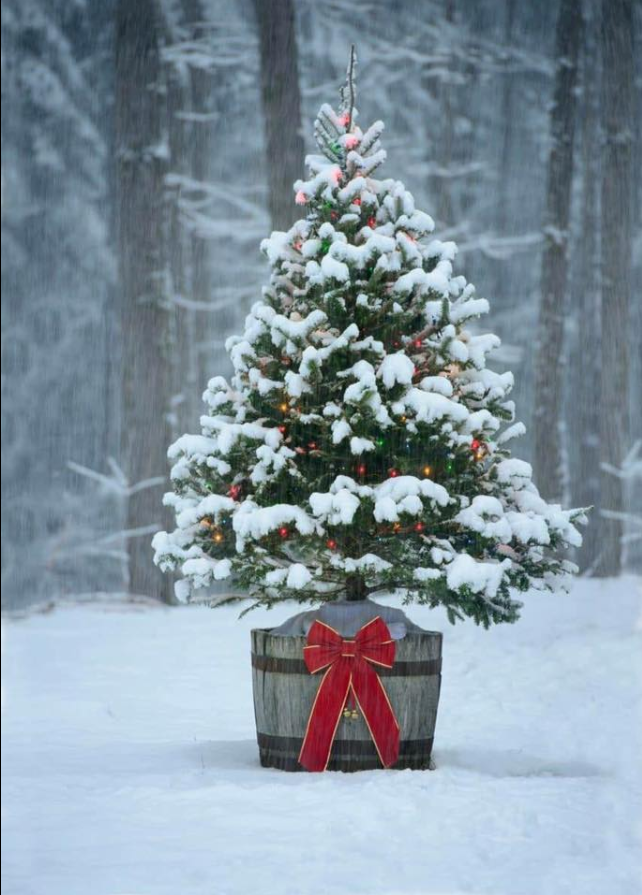 Oh Christmas Tree Outdoor Christmas Tree Decorations Snowy