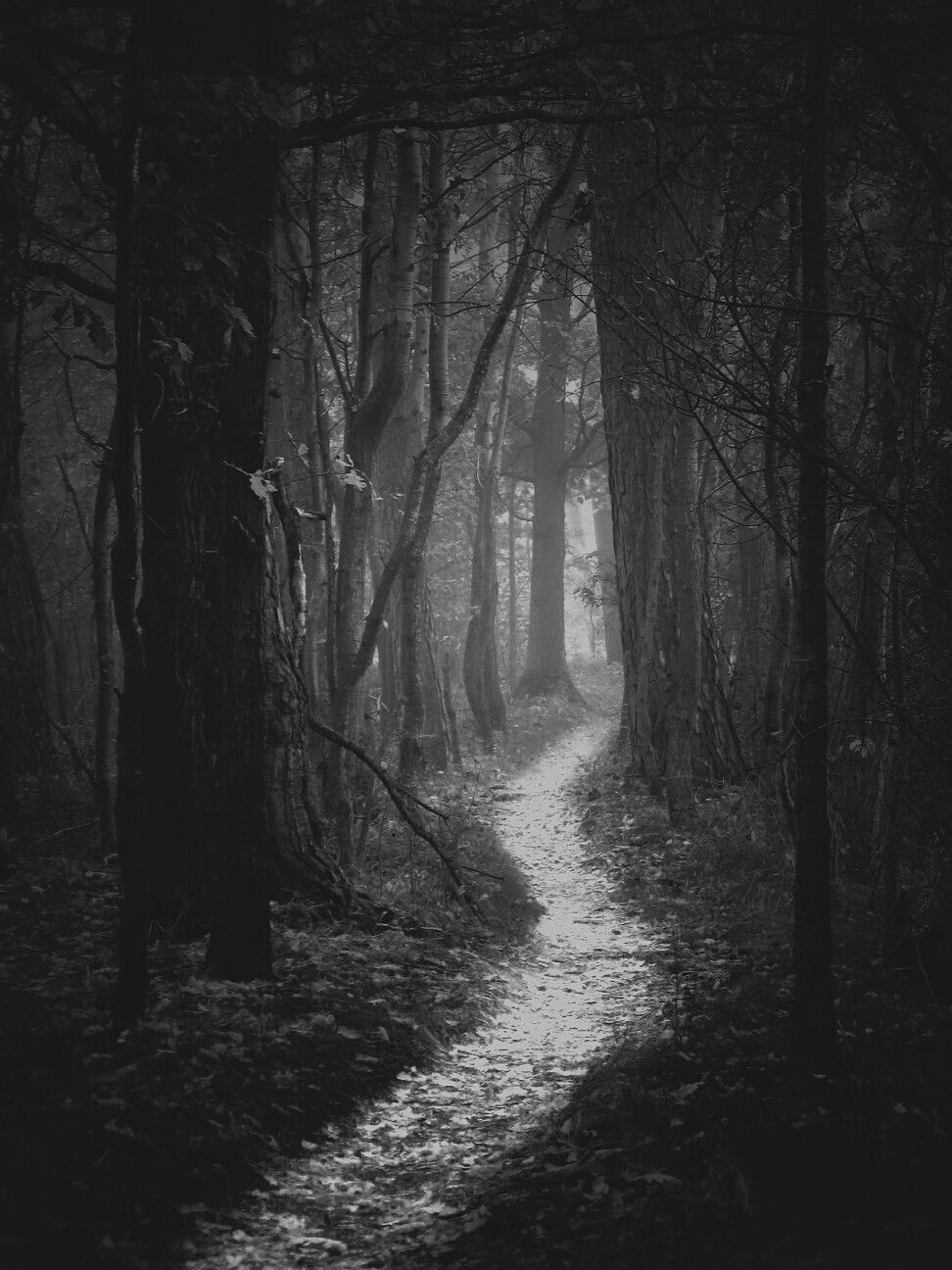 Dark Forest Woods Nature Black Landscape Forest Path Fantasy Landscape Winter Forest