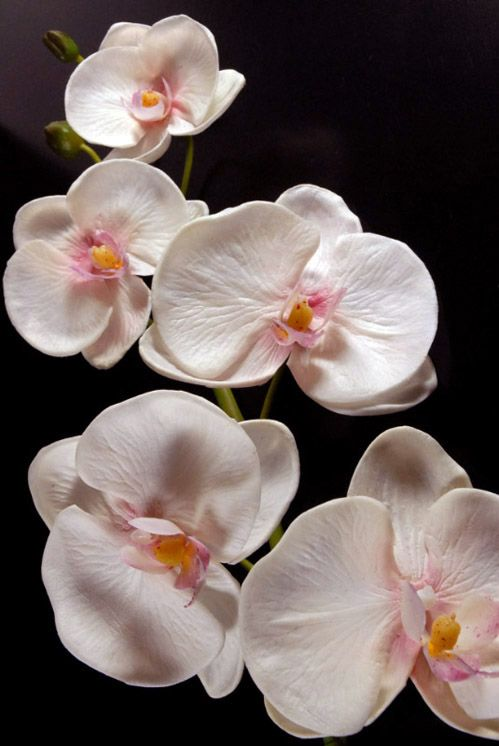 Real Touch White Orchid Phalaenopsis Stem 38in White Orchids Orchid Flower Beautiful Pink Flowers