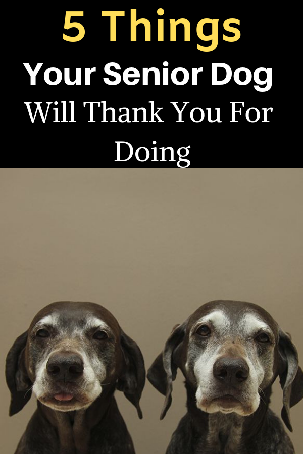 5 Things Your Senior Dog Will Thank You For Doing Dogs