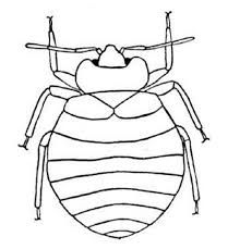 Image result for insect templates | River bugs games | Pinterest ...