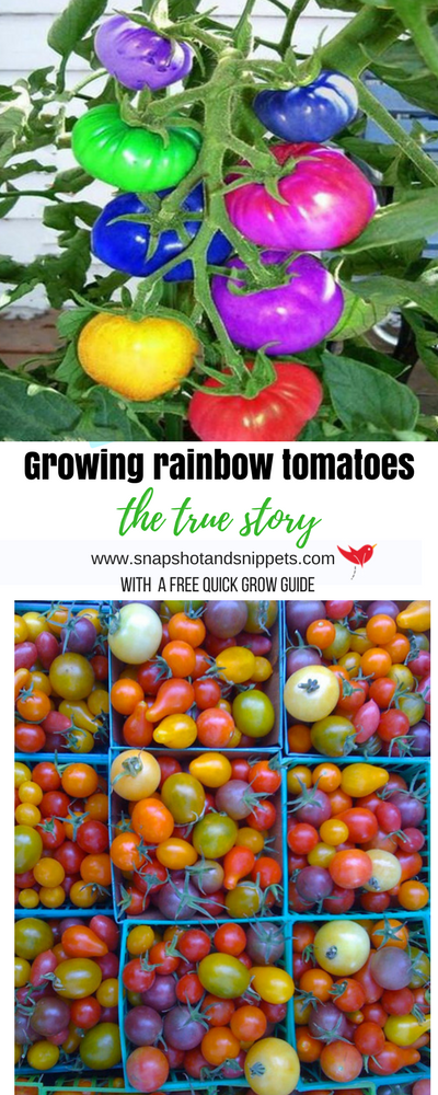 Gardeners World Magazine Free Tomato Seeds