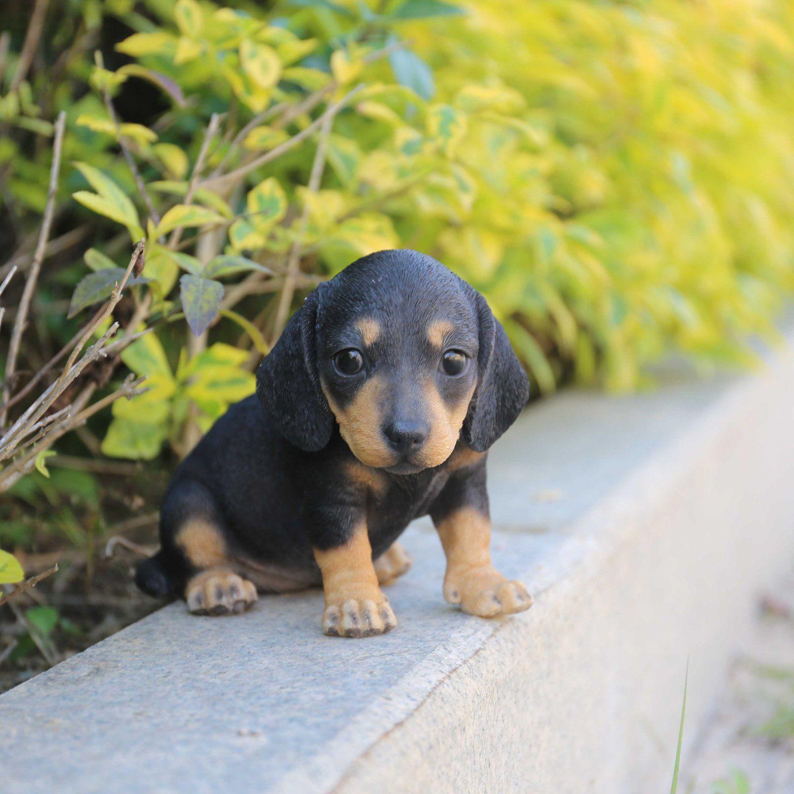 Hi Line Gift Ltd Dachshund Puppy Statue Dachshund Puppies
