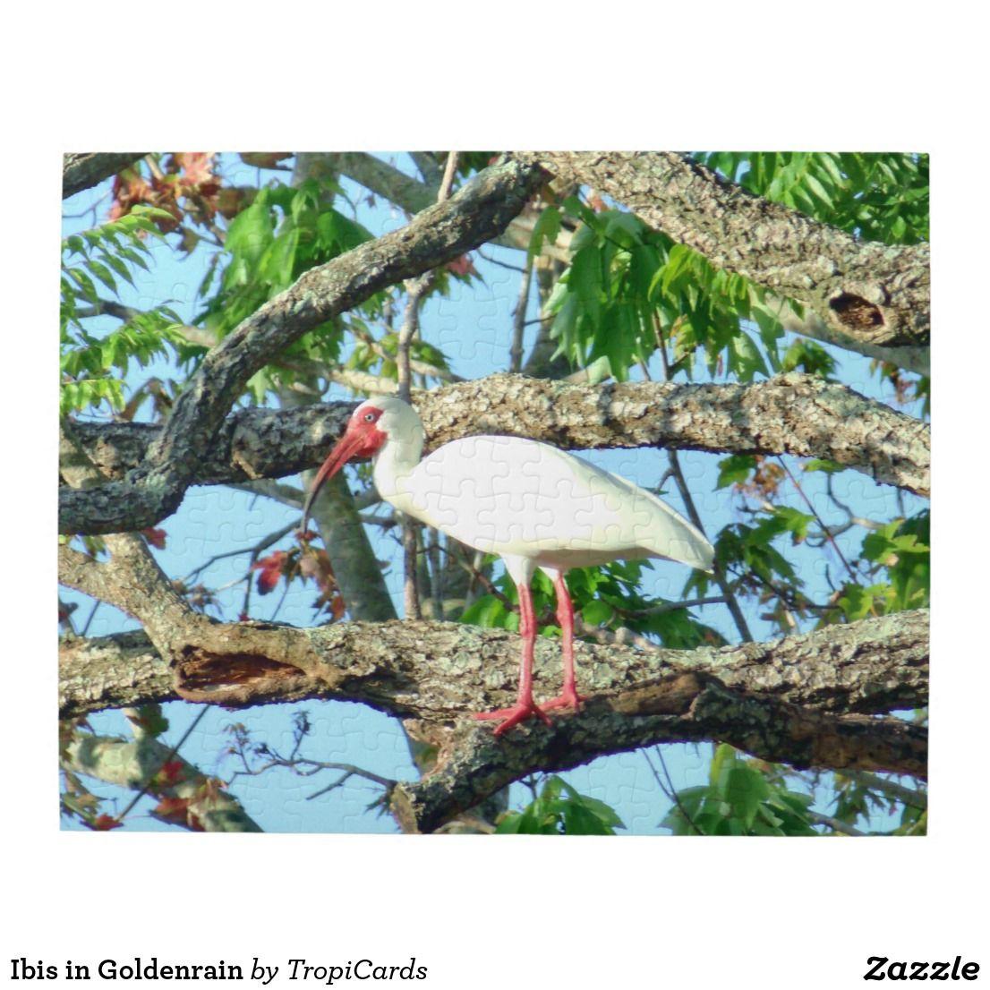 Ibis in Goldenrain Jigsaw Puzzle | Pinterest