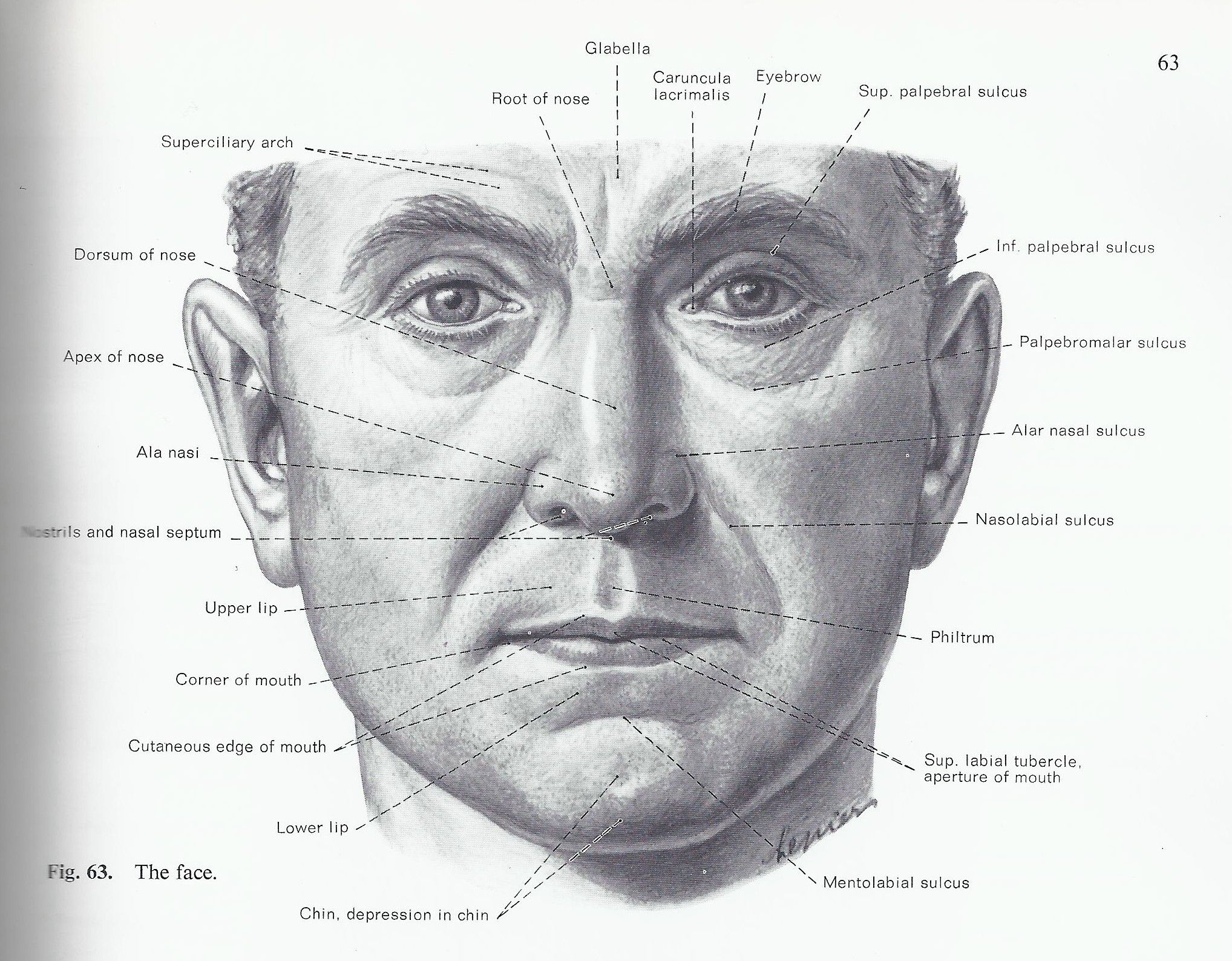 Facial surface landmarks | Facial Anatomy | Pinterest | Facial ...