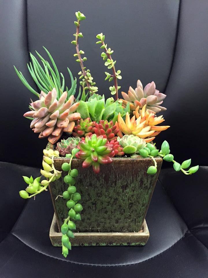 Suculentas cactus y suculentas suculentas jardiner a for Curso cactus y suculentas