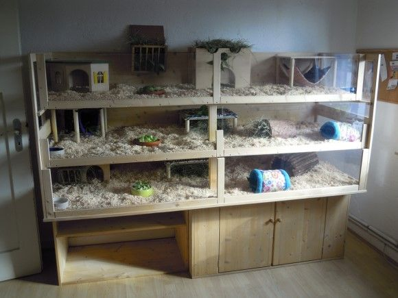 Pin auf great ideas for guinea pigs