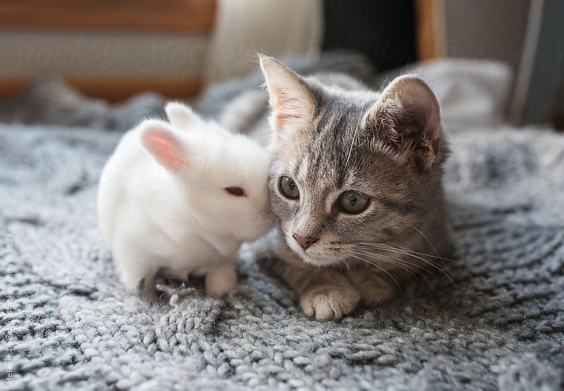 love by Melanie DeFazio | Pets, Cute baby bunnies, Cute cat gif