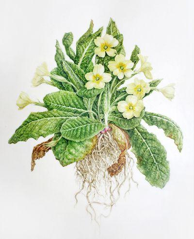 Flora Sibiri i Dalniago Vostoka : Botanicheskii muzei