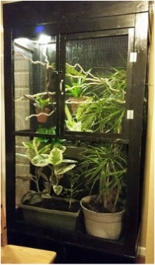 A Large Meller's Chameleon Cage. Check out these chameleon enclosures.
