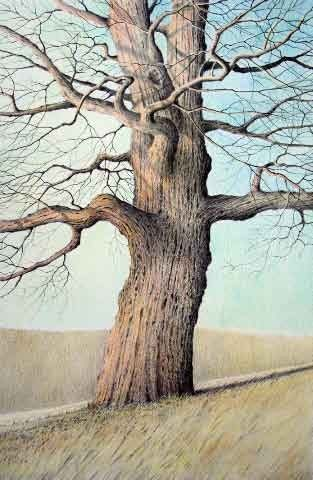 Very Beautifully Done Tree Color Pencil Drawing Color Pencil