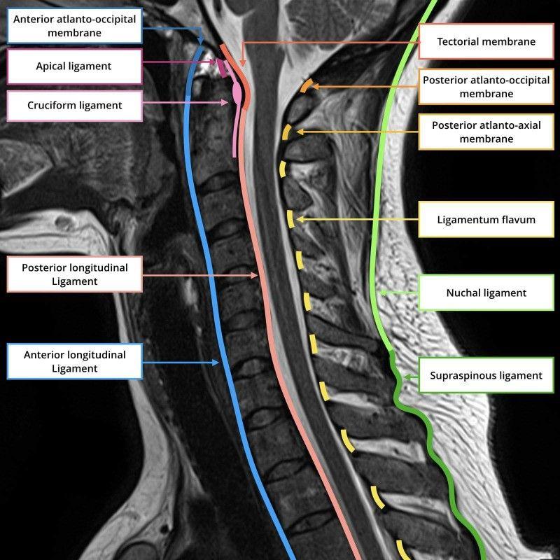 Pin de Emir Rodriguez en Medicine | Pinterest | Radiología, Medicina ...