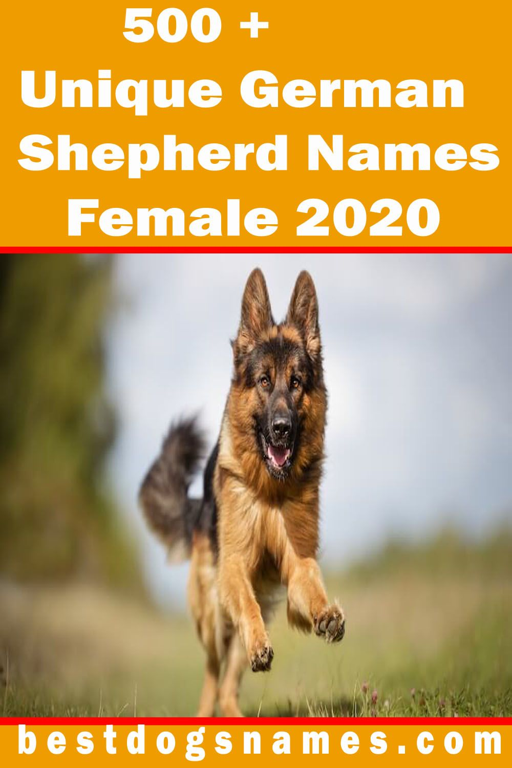 500 Most Popular German Dog Names Ultimate List Of 2020 In 2020