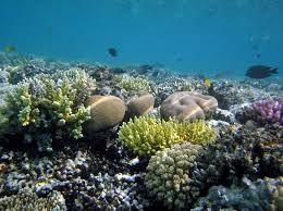 korálové utesy