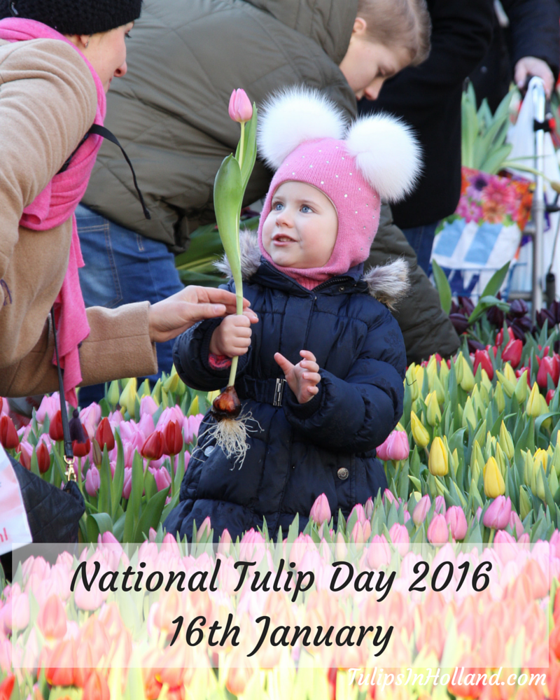 Pick your own tulips on National Tulip Day 2016 in Amsterdam!  See http://tulipsinholland.com/2015/10/national-tulip-day-2016/…