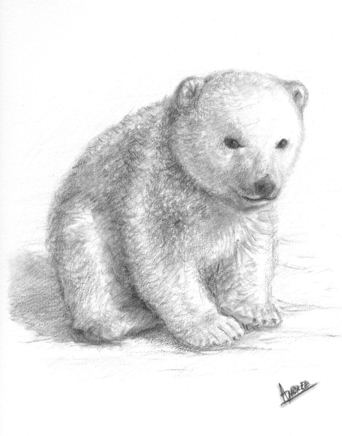 Drawings Of Bear Cubs Google Search Pinterest And Tattoo